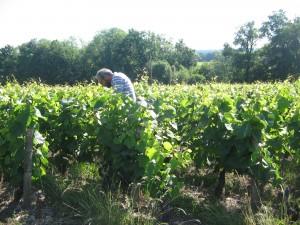 osservare le vigne per apprendere dalla terra..