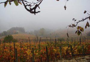 vigne d'autunno a Dogliani