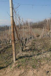 vigne Sella a Mesola, Bramaterra
