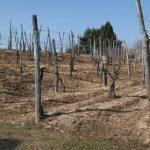 Terreno a matrice acida Masserano, nord Piemonte