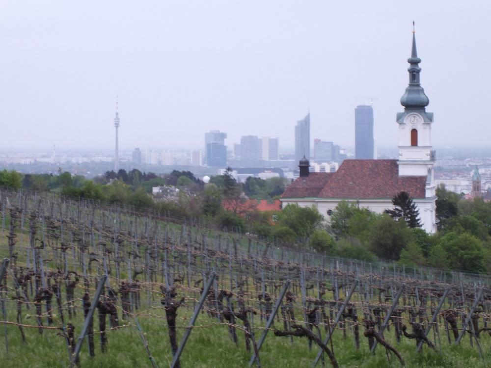 Vienna vista dalle colline vitate