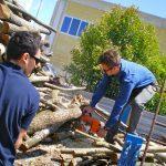 Si taglia la legna