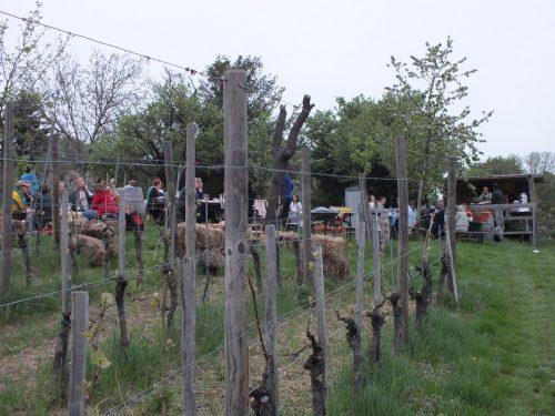 Picnic nelle vigne Obermann