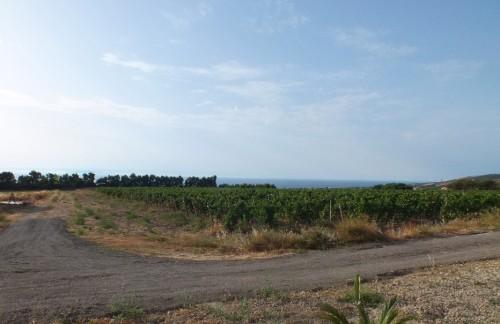 Romangia vigne