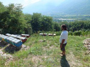 api nella vigna