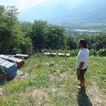 Giuseppe con le api