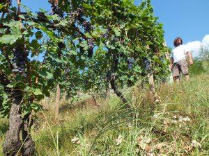 Azienda Boffalora vigne Valtellina