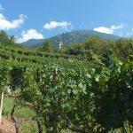 Castione Andevenno vino