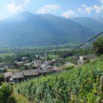 La funicolare artigianale nella vigna Ca' Novi