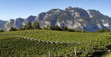 vigne Trentino