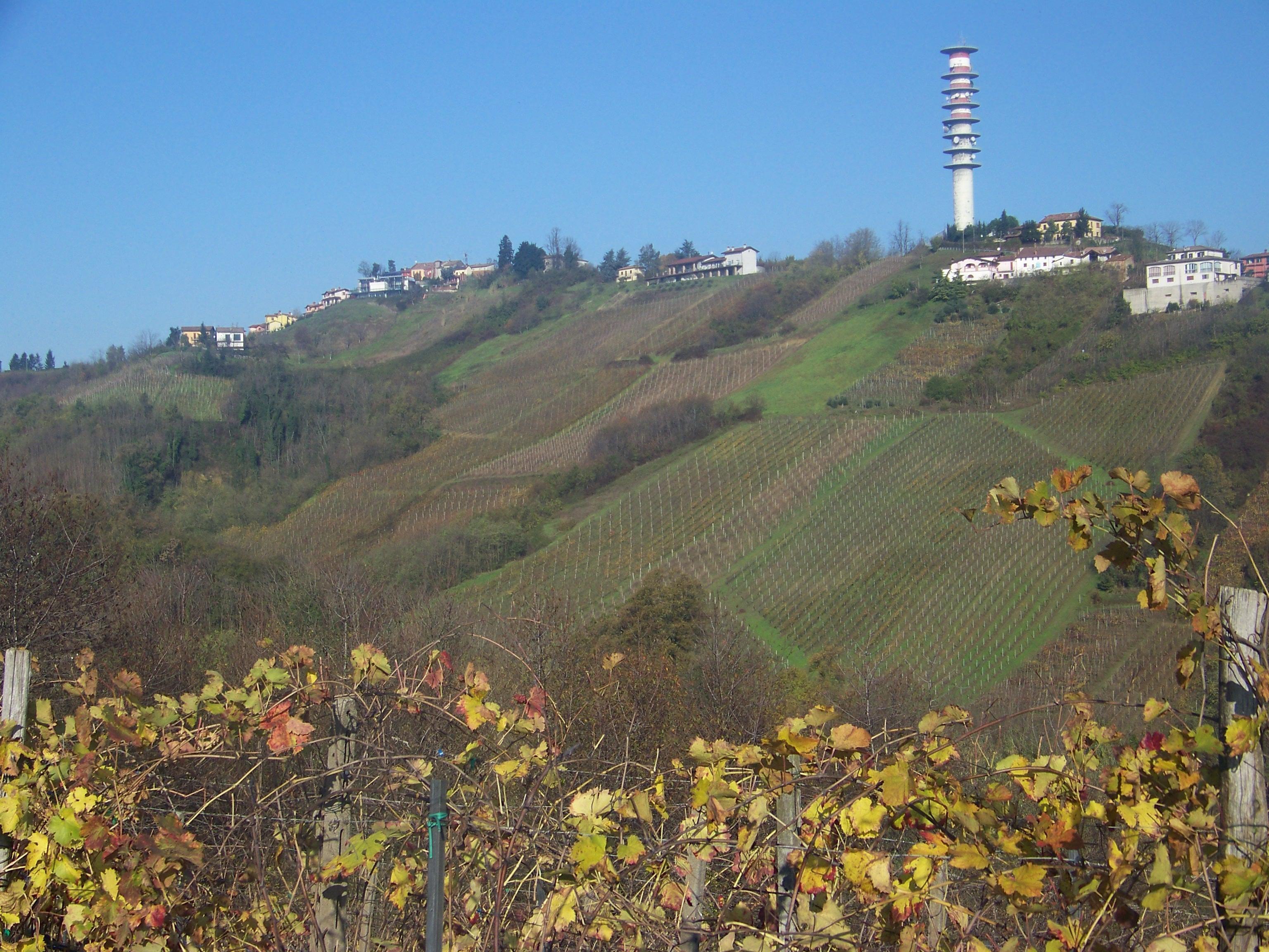 Valle Solinga_Vigneto Buttafuoco