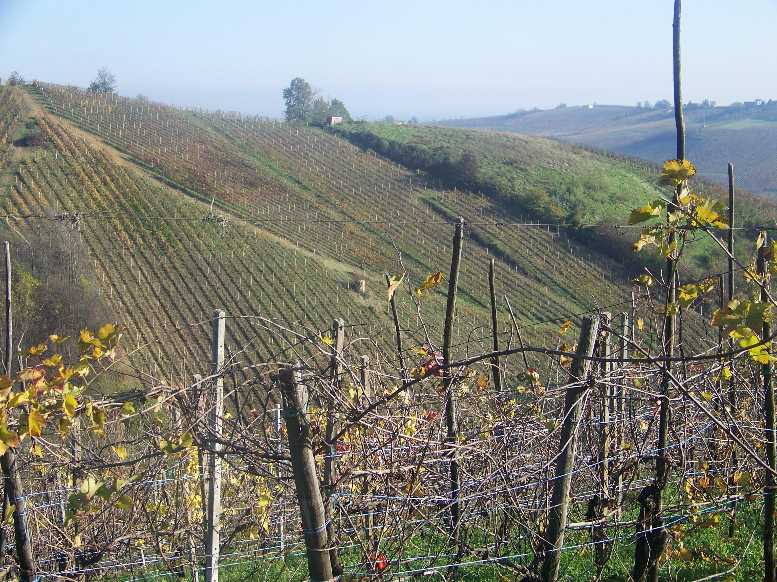 Valle Solinga_vigneti Picchioni
