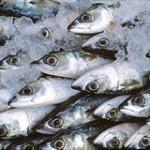 Pesce-Surgelato-Controverso-150x150