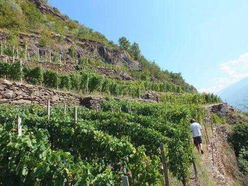 Terrazzamenti Valtellina