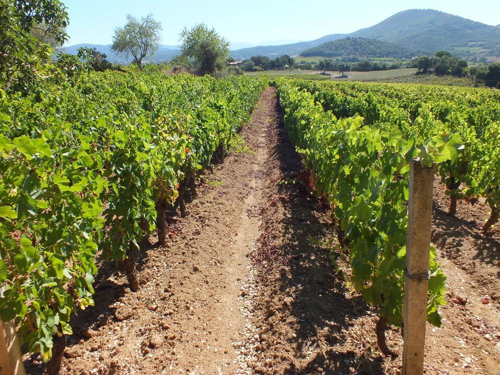 vigne Fradiles