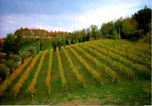vigne-carossa