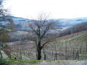 Montebernardi_vigne_3