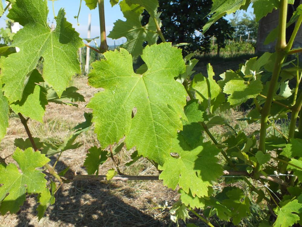 In vino veritas l acquabuona diluoghi in cantina francesco brigatti di suno un altro - Un altro modo per dire porta ...