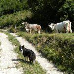 Il cane pastore