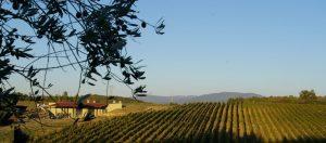 La Fralluca_vigne e cantina