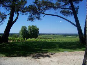 le vigne sullo sfondo