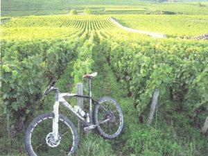 Finage_vigne e bici