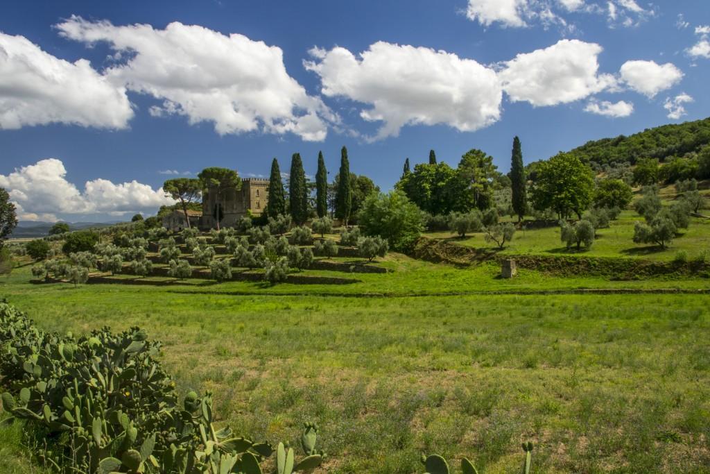 Assaggiati per voi/Tenuta Eleonora di Toledo: olio extra vergine senza compromessi