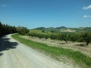 De Stefenelli_road