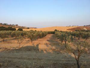 contrada-dattilo-2-tramonto