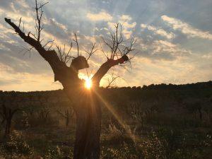 contrada-dattilo-3-sole-al-tramonto