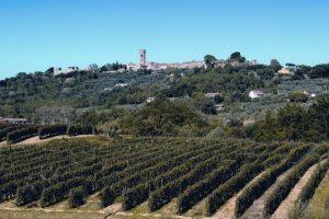 montecarlo_panorama-sul-borgo