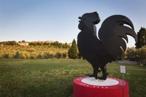 gallo-nero
