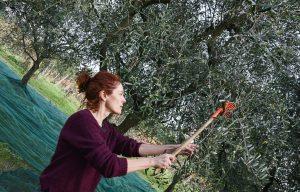 005barbara-chelini-durante-la-raccolta-delle-olive