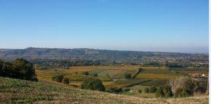 vigne-francesconi