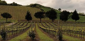 vigne-tenuta-casali