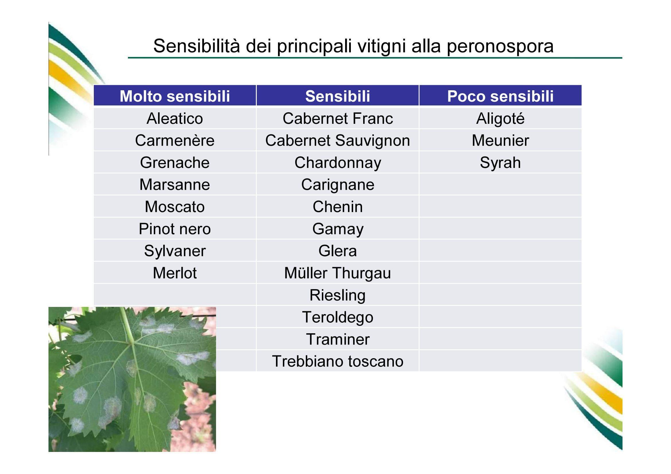 Calendario Dei Trattamenti Della Vite 2019.Ridotto Il Rame In Viticoltura Strategie Agronomiche E