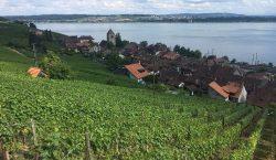 La serenità della Svizzera, e i vigneti sul lago di…