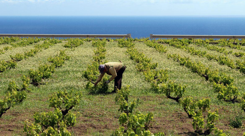 Pantelleria, isola del sublime/2
