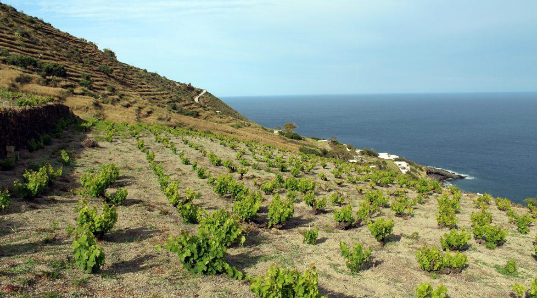 Pantelleria, isola del sublime/3