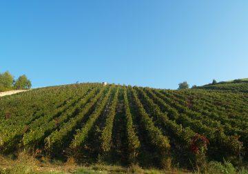 """Diari d'Oltrepò. """"Il vino è una cosa seria"""". Ovvero, la resistenza dei vignaioli pensanti/2"""