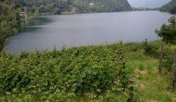 Giro d'Italia a tappe (golose): il vino della Valcamonica