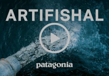 Artifishal è ora visibile su Youtube. Il film che mostra come l'allevamento ittico danneggi l'ambiente naturale