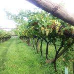 Maso Grener e distilleria Pilzer: il Trentino che ci piace