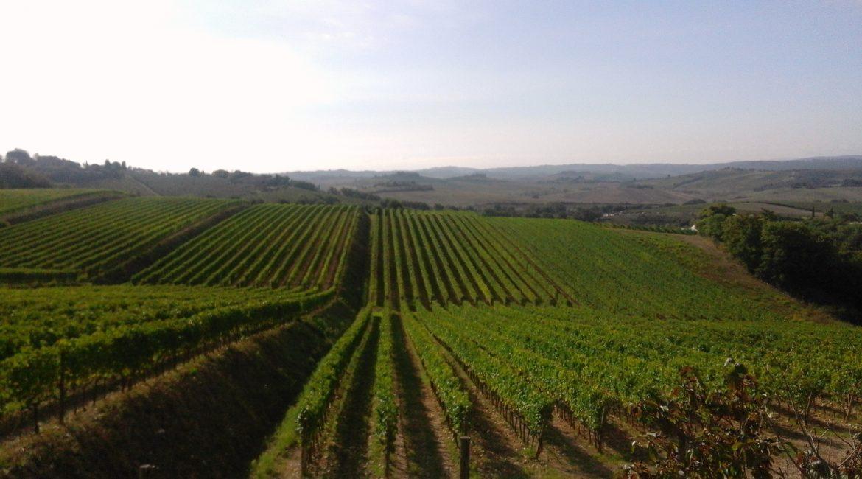 Diari chiantigiani: Tenuta di Bibbiano, Monte Bernardi, Tenuta La Massa, Le Cinciole