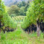 Cambiamento climatico e stile dei vini