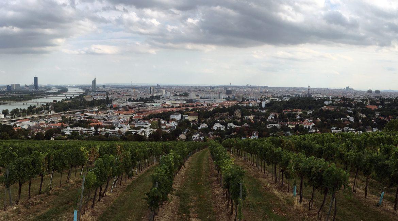 Wien & wein. Prima parte