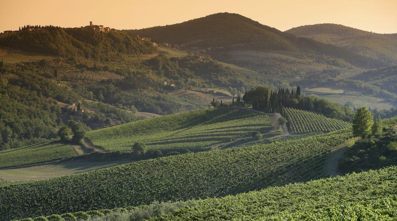 Chianti Classico 2018: la piacevolezza fatta vino