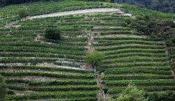 Un viaggio in Wachau. Territorio, vini e interpreti sulle sponde…