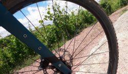 Dalle risaie al cielo: in bici verso le vigne di…