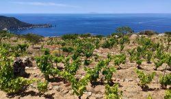"""L'Isola del Giglio e il suo """"Ansonaco"""""""